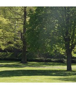 Mieszanka traw gazonowych - Park posadzone