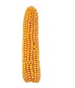 Kukurydza pastewna KOSMO