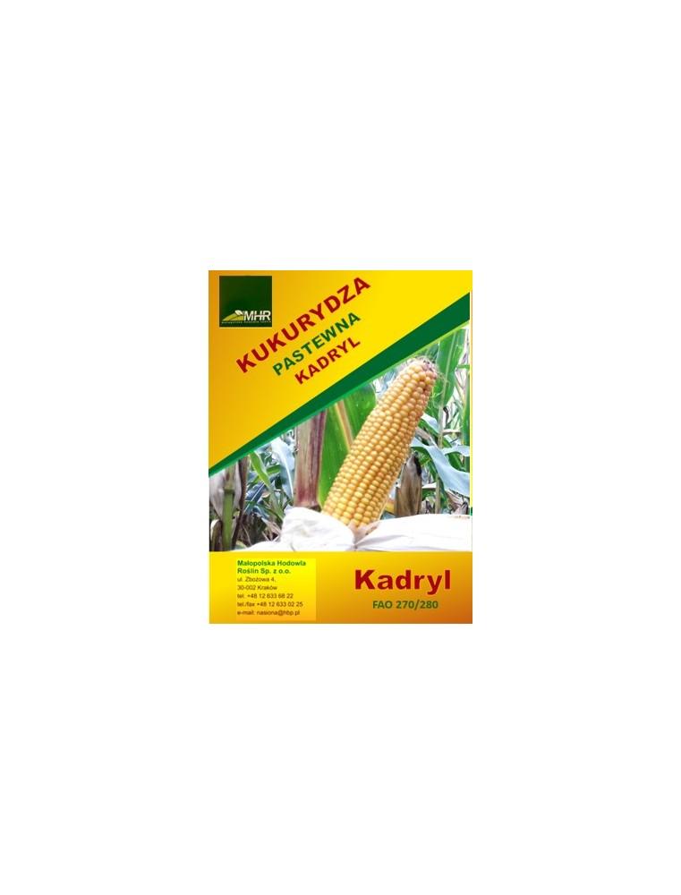 Nasiona kukurydzy kadryl
