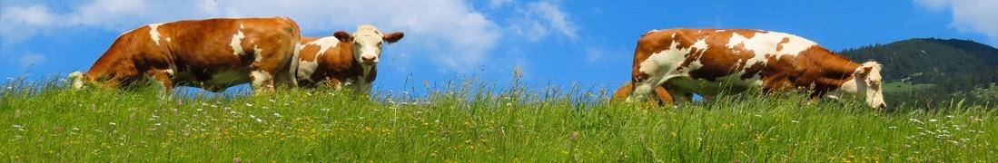 Mieszanki traw pastewnych | Małopolska Hodowla Roślin