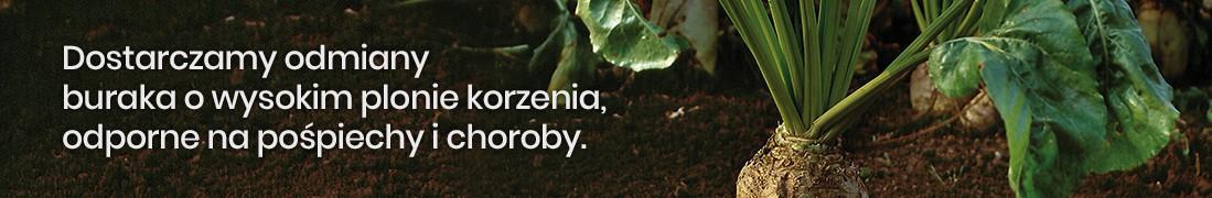 Nasiona buraków pastewnych jednokiełkowych: Małopolska Hodowla Roślin