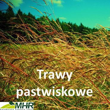 trawy pastwiskowe