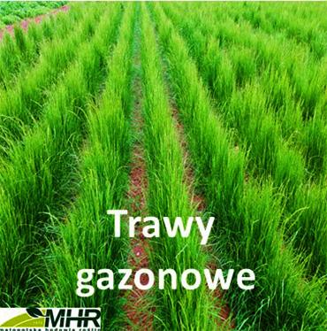 trawy gazonowe