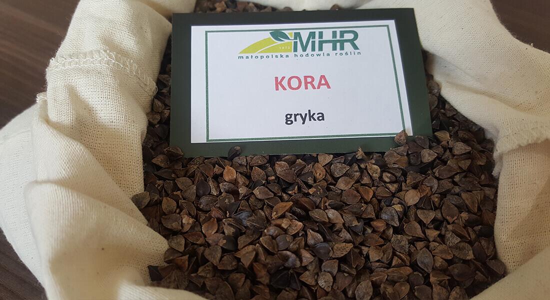 MHR - gryka kora