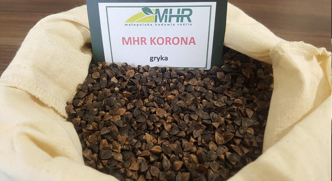 MHR - gryka korona