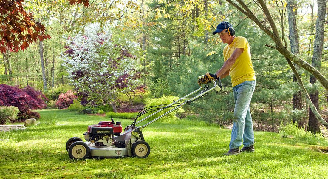 trawnik uprawa zakładanie