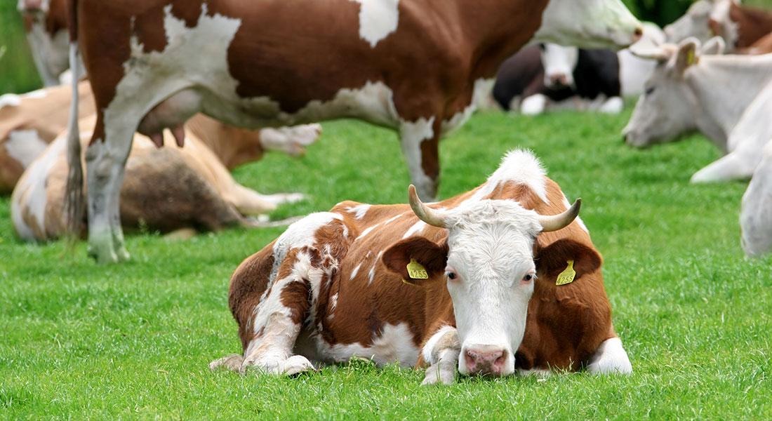 Rola buraka pastewnego w żywieniu zwierząt